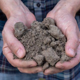 Un orto perfetto grazie al concime organico